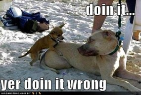 funny-dog-pictures-little-dog-fails-at-love