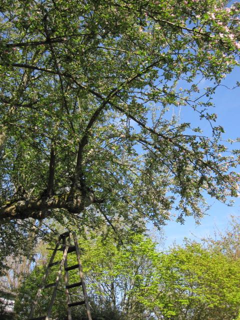 My yard.  April 2012.